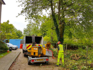 Tree Clearance/Stump Grinding in Kent