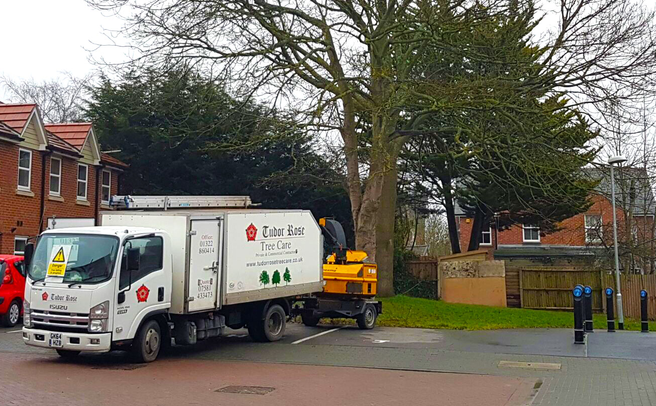 Commercial Tree Surgery Kent